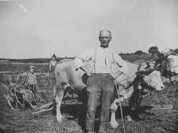 Zoals je ziet werden ook koeien op het land gebruikt.